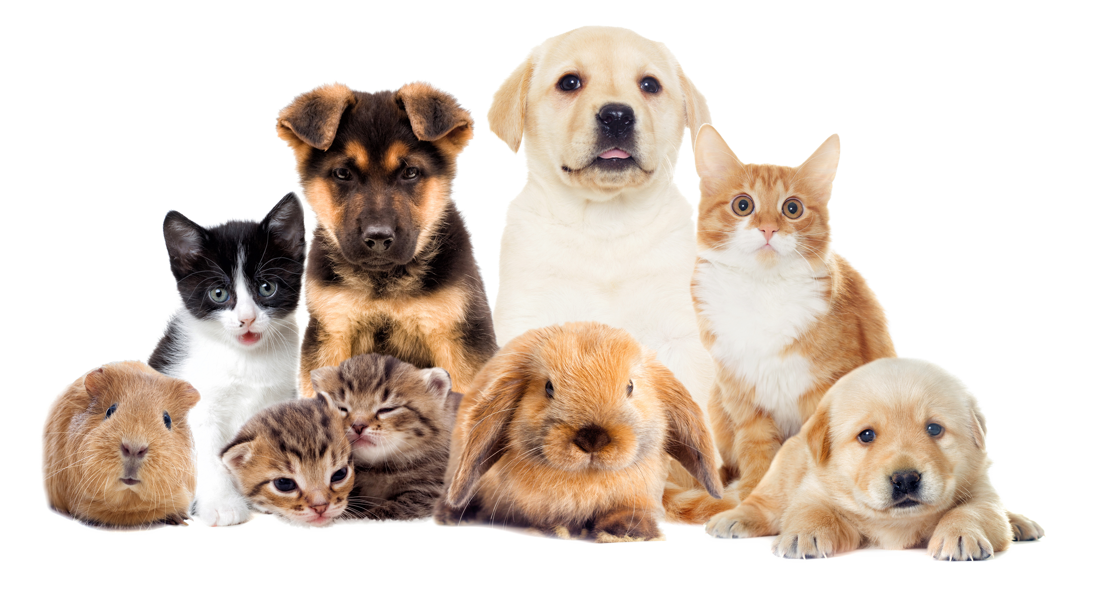 Health Insurance For Pets