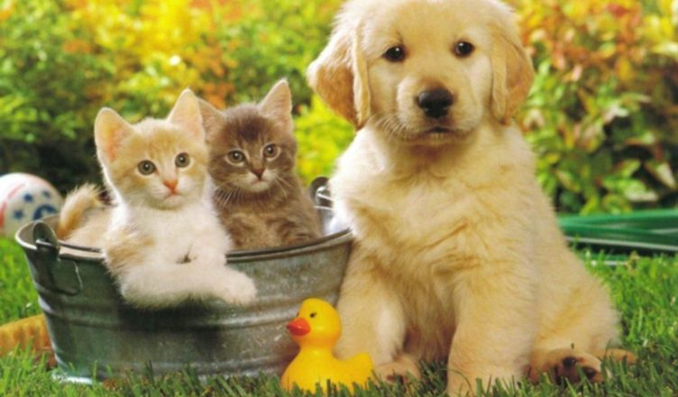 Pet Insurance For Dogs - Why You Should Protect Your Protector
