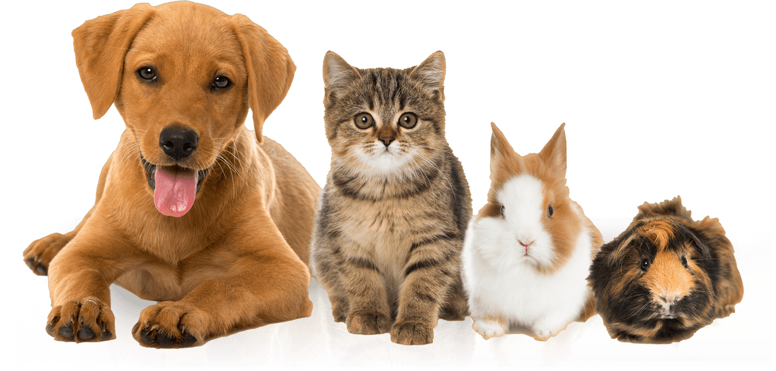 Will Car Insurance Cover Your Pet in an Accident?